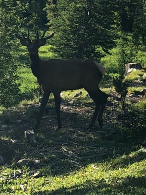 Tom, Thomas and I walked past this bull elk who was eating next to the road. This photo was taken without zooming in.
